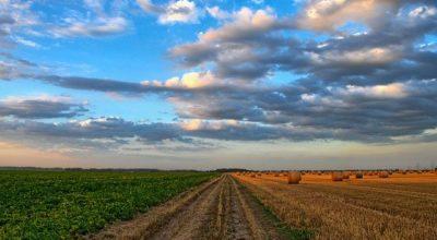Richieste di intervento per danni subiti alle colture agricole