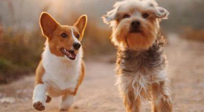 Giornata di microchippatura gratuita dei cani – 6 ottobre