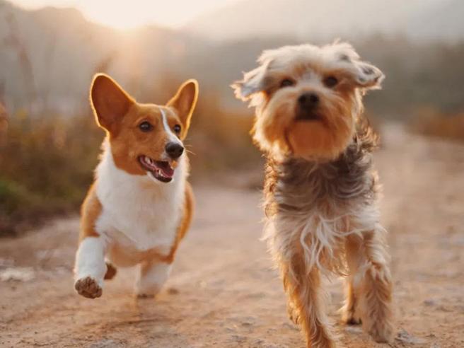 Chip Day: giornata per l'applicazione del microchip e iscrizione all'anagrafe canina – 7 luglio 2021-