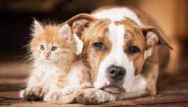 Concessione del contributo comunale finalizzato alla sterilizzazione dei cani di proprietà o dei gatti appartenenti a colonie feline ufficialmente censite